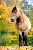 Horse in autumn. — Stock Photo