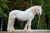 White horse standing — Stock Photo