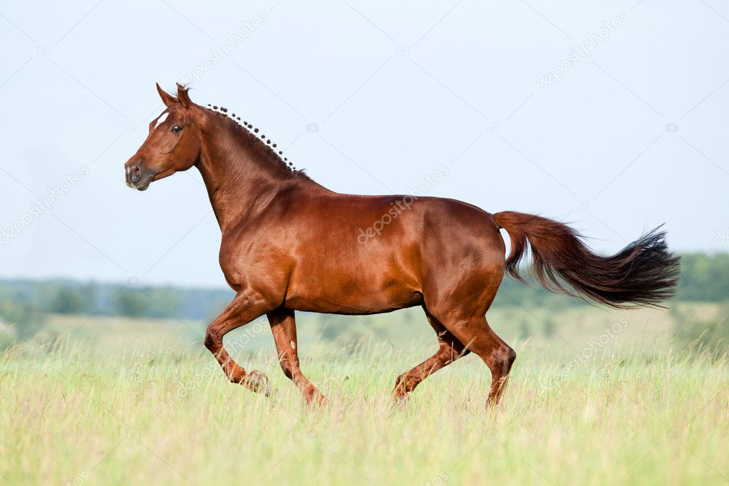 Chestnut horse running in field — Stock Photo © Alexia ...
