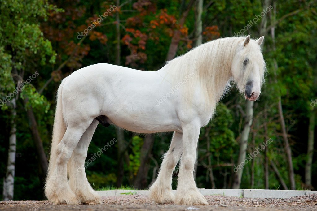 White horse standing — Stock Photo © melory #7670365