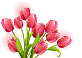 Bunch of tulips — Stock Vector