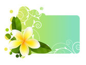 Tropic banner with frangipani — Stock Vector