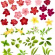 Collection of different flowers and leaves - Stock vektor