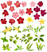 Collection of different flowers and leaves — Stock Vector