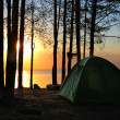 Tent in the forest — Stock Photo