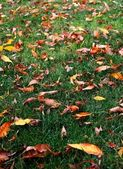 Grass Leaves Autumn — Stock Photo