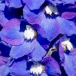 Abstract violet flowers on field — Stock Photo #6784759