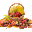 Autumn leaves and fruits isolated — Foto Stock