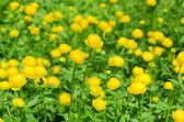 Beautiful spring flowers — Stockfoto
