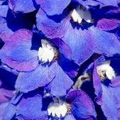 Alan soyut mor çiçekler — Stok fotoğraf