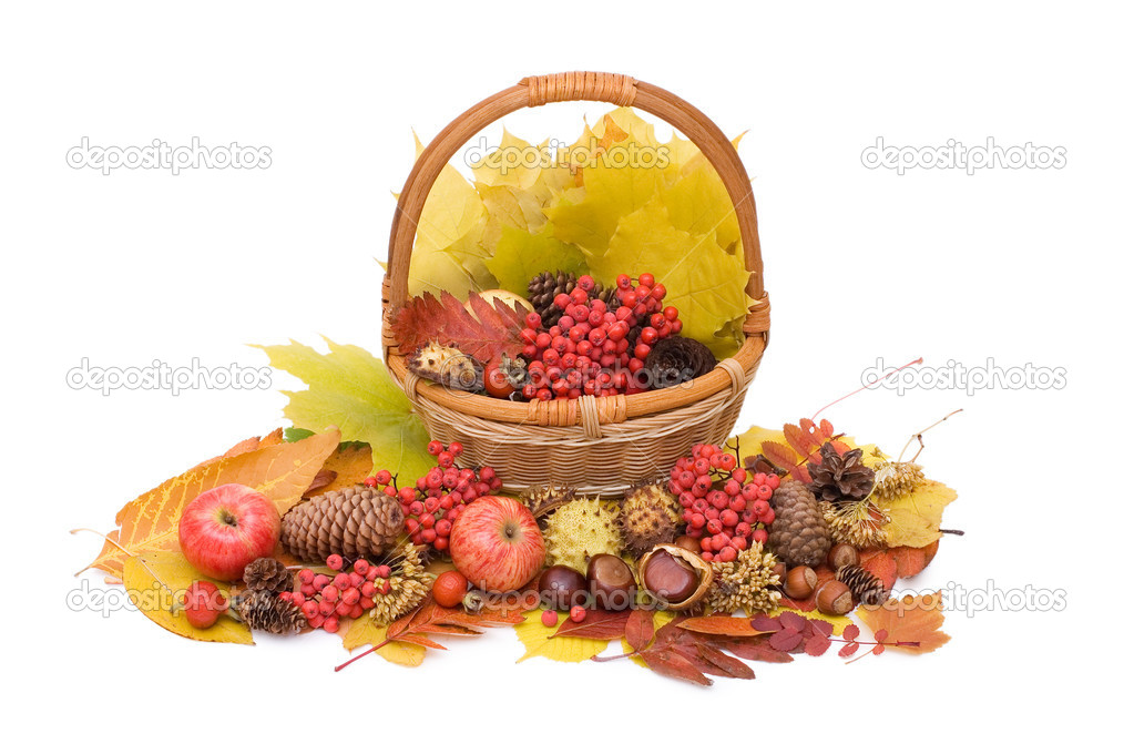 Autumn leaves and fruits isolated on white  Stock Photo #6786304
