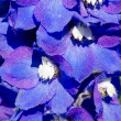 Abstract violet flowers on field — Stock Photo