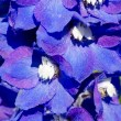 Abstract violet flowers on field — Stock Photo #6884422