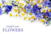Beautiful blue cornflower — Stock Photo