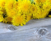 Yellow dandelion on a wooden surface — Stock Photo