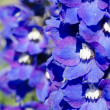 Abstract violet flowers on field — Stock Photo #7061338