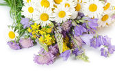 Bouquet of wild camomiles — Stock Photo