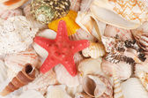 Sea shell as a background — Stock Photo