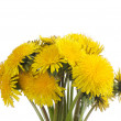 Yellow dandelion isolated on a white - Stock Photo