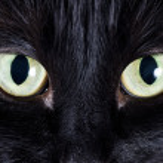 Portrait of a black kitten — Stock Photo