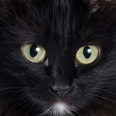 Portrait of a black kitten — Stock Photo