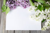 The beautiful lilac on wooden surface — Stock Photo