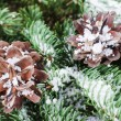 Pine cones on a branch - Stock Photo
