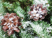 Pine cones on a branch — Foto Stock