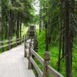 Old wooden bridge in green wood - Stockfoto