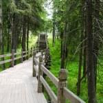 Old wooden bridge in green wood — Stock Photo