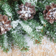 Pine cones on a branch — ストック写真