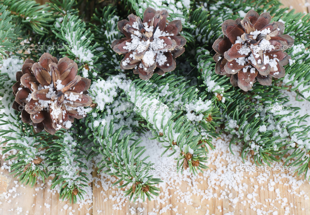 Pine cones on a branch in snow — Stock Photo #7649482