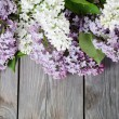 Beautiful lilac — Stock Photo #7713782