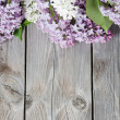 Beautiful lilac — Stock Photo #7852934