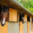 Stock Photo: Horses in stable