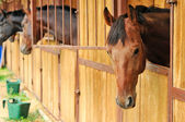 Horses in the stable — Stock Photo