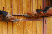 Horses in the stable — Foto Stock