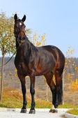 Bay horses exterior — Stock Photo