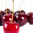 Cherry — Stock Photo #7019563