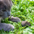 Foto Stock: Cat and mouse