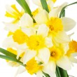 Stock Photo: Narcissus