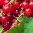 Red currant — Stock Photo #7351518