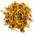 Funnel Chanterelle — Stock Photo