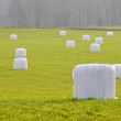 Straw bales wrapped in plastic - Stock Photo