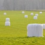 Тюков соломы, завернутые в пластик — Стоковое фото #7821069