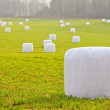 Foto Stock: Straw bales wrapped in plastic