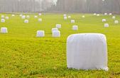 Pakowane w plastikowe bele słomy — Zdjęcie stockowe