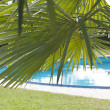 Foto de Stock  : Tropical Pool
