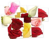 Collage of roses from photos — Stock Photo