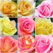 Collage of roses from photos — Stock Photo #7820196